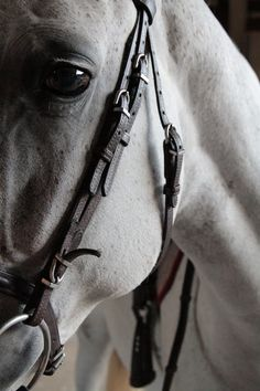 """""""Advice from a horse: take life's hurdles in stride, loosen the reins, be free spirited, keep the burrs from under your saddle, carry your friends when they need it, keep stable, and gallop to greatness."""" ~Shamir"""