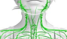 The lymphatic system is part of the circulatory system and a crucial part of the immune system. It consists of glands, lymph nodes, the spleen, thymus gland, and tonsils. Infection Des Sinus, Sante Bio, Lymph Fluid, Lymphatic Drainage Massage, Lymph Nodes, Lymphatic System, Circulatory System, Body Systems, Dry Brushing