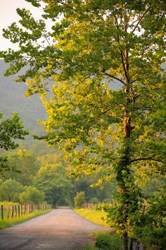 Tree by a Country Lane, Cades Cove, Great Smoky Mountains National Park, Tennessee © Doug Hickok All Rights Reserved. Hue and Eye Photography Beautiful Roads, Beautiful World, Beautiful Landscapes, Beautiful Places, Landscape Photos, Landscape Art, Cades Cove, Foto Art, Nature Pictures