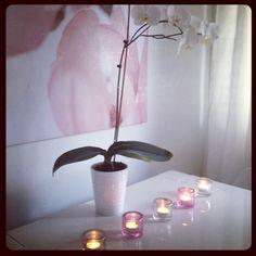 CASA Blogit - Coconut White