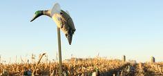 Fall Favorites | Prairie & Wild |  Mary Novak