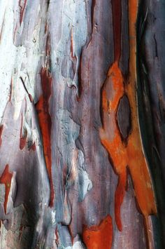Bark I Photography by Lynn Pilewski Watercolor Paintings Abstract, Abstract Art, Watercolor Artists, Painting Art, Nature Artwork, Tree Bark, Patterns In Nature, Love Art, Sculpture