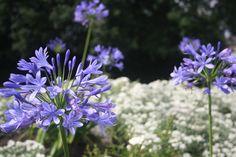 Home Merel en Mos Plants, Seeds, Plant, Planting, Planets
