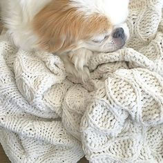 #sugarthejapanesechin isn't feeling the best lately. According to her vet, she has an infection.  Since then, she's been getting lots of love, yummy people food (gotta take those meds somehow), and naps!