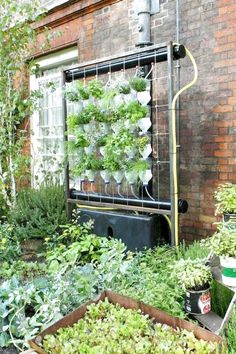 40 Easy To Try Hydroponic Gardening For Beginners Design Ideas And Remodel 40 E. 40 Easy To Try Hydroponic Gardening For Beginners Design Ideas And Remodel 40 Easy To Try Hydropon Vertical Hydroponics, Hydroponic Farming, Hydroponic Growing, Hydroponics System, Diy Hydroponics, Aquaponics Plants, Aquaponics Greenhouse, Vertical Farming, Gardening For Beginners