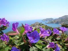 Giovanni Marradi / Tango de Roses Tango, Greek Culture, Blue Flowers, Mountains, Nature, Plants, Photography, Travel, Music