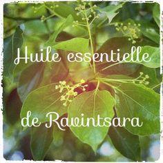 Antivirale, stimulante immunitaire, tonique ET relaxante... découvrez l'huile essentielle de Ravintsara!