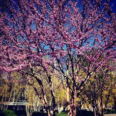City Park w/Trees
