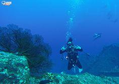 channel islands de californie | 所以就開始搞怪了起來,潛水其實沒這麼難,有教練 ...