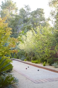 Love this bocce court design by Daniel Nolan. Figs, Euphorbias, cycads, hellebores, asparagus ferns, Japanese maples, Olive trees, and DG
