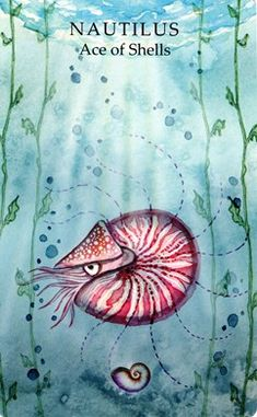 The Nautilus is one of my Animal Guides. The meaning of this deep sea cephalopod will truly amaze you! Nautilus LoVe ♡⚓♡