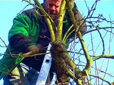 Obstbaumschnitt Praxiswissen - Teil 2