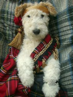 The Fox clan tartan ? I love wirehaired fox terriers! Fox Terriers, Perro Fox Terrier, Wire Fox Terrier, Cute Puppies, Cute Dogs, Dogs And Puppies, Doggies, I Love Dogs, Puppy Love