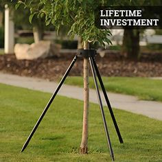 Our tree staking kit features a modern design that is non intrusive. Say goodbye to ties and straps! Because it's made of high quality material, you can use it year after year. Tree Stakes, Tree Support, Camping Essentials, Small Trees, Tripod Lamp, Fruit Trees, Garden Landscaping, Things To Come, Modern Design