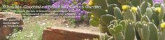 Ethel M Chocolates factory tour and Botanical Cactus Garden