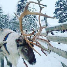 Panoramio - Photos by Photos Rovaniemi, Laponia Finlandesa Enjoy The Silence, Arctic Circle, Midnight Sun, Outdoor Activities, Northern Lights, The Incredibles, Landscape, Winter, Photos