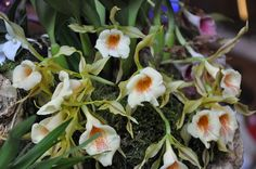 Porter's Orchids Holiday Open House – Orchidelirium
