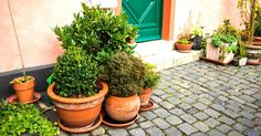 """Sabe aquela sua vó que fazia chá de plantas """"mágicas"""" do quintal para o dia daquela gripe? Algumas daquelas plantas realmente têm propriedades médicas e se..."""