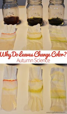 Why Do Leaves Change Color? Autumn Science