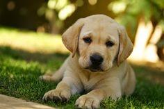 Telekarma - Blog o psach, kotach i innych domowych pupilach: Jak nauczyć szczeniaka załatwiania się na dworze?