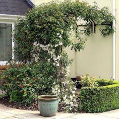 Så här snyggt kan man göra med en växtportal för vägg!  Dessa finns i stl 120 och 150 cm i bredd att beställa från 995:- Fraktfritt!  #växtportal #klätterväxter #rumsavdelare #växter #tädgårdsrum #minträdgård #trädgårdsliv #gardenlife #trädgårdsinspiration #gardeninspiration #trädgård #garden #wexthuset #inredning #växtbågar