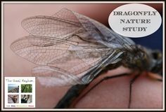 dragonfly nature study cover image