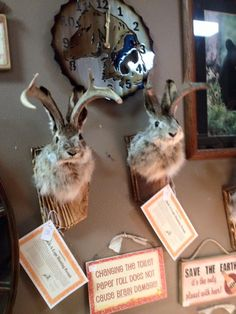Fresh of the truck, a new batch of Jackelopes! These awesome horned bunnies are the perfect combination of tough and tender so its sure to appeal to both the man and lady of the house! Or perhaps its the perfect starter taxidermy for your kiddos! I know mine would love one!