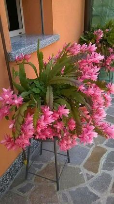 Cacti And Succulents, Planting Succulents, Cactus Plants, Garden Plants, House Plants, Planting Flowers, Orchid Cactus, Cactus Flower, Beautiful Flowers Garden