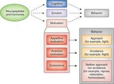 Overview of neuroendocrinological influences on human social cognition, emotion, and motivation as potential (and measureable) mediators of behavior. (Credit: Cade McCall & Tania Singer, Nat NeuroSci) #NPG #sub
