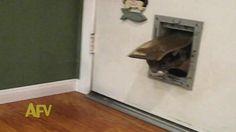 Fat Cat Has Trouble Getting Through Cat Door