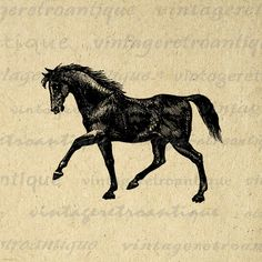 Digital Printable Black Horse Download Graphic Artwork Illustration Image Vintage Clip Art. Printable high resolution digital graphic from vintage artwork for transfers, printing, tea towels, t-shirts, papercrafts, and more. Antique artwork. This digital graphic is high quality, large at 8½ x 11 inches. Transparent background version included with all images.