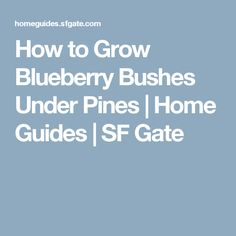 How to Grow Blueberry Bushes Under Pines | Home Guides | SF Gate