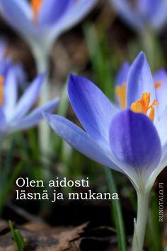 Voimaruno & voimakortit vko 14:PILVI: Olen aidosti läsnä ja mukana, sahrami voimakortit, runotalo.fi