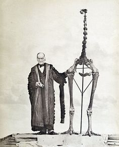 Richard Owen, who became director of London's Museum of Natural History, was the first to recognise that a bone fragment he was shown in 1839 came from a large bird. When later sent collections of bird bones, he managed to reconstruct moa skeletons. In this photograph, published in 1879, he stands next to the largest of all moa, Dinornis maximus, while holding the first bone fragment he had examined 40 years earlier. Richard Owen, Memoirs on the extinct wingless birds of New Zealand, vol. 2.