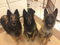 Riser vive en Hartland, Wisconsin con sus hermanos, Keeper y Spree.
