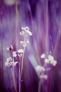 Photographer sonic oasis - plants & flowers (9)