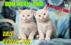 Bon Weekend, Cats, Animals, Handsome Quotes, Bonjour, Calendar, Gatos, Animales, Kitty Cats