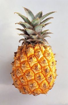 Pineapple http://25.media.tumblr.com/tumblr_ma1ve3LlhO1qa9yjmo1_r1_500.jpg Benefits Of Pineapple, Pineapple Fruit, Pineapple Curry, Baby Pineapple, Pineapple Upside, Pineapple Express, Strawberry Fields, Pictures Of Fruits, Pineapple Nutrition Facts