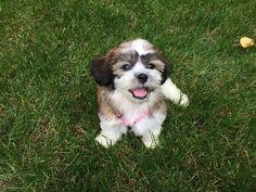 Cutest Puppy Smiles - 11