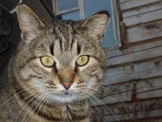 История кота Обормота (байка из жизни)
