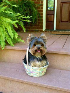12 Pets Ready for Easter Egg Hunt