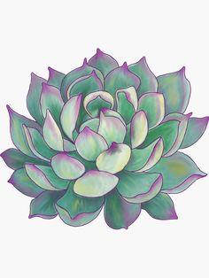 'Succulent plant' Sticker by redqueenself - Modern Types Of Succulents Plants, Succulents Drawing, Buy Succulents, Silk Plants, Cool Plants, Planting Succulents, Succulents Wallpaper, Nature Plants, Succulent Plants