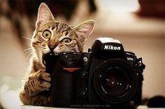 Как делать правильные и красивые фотографии?