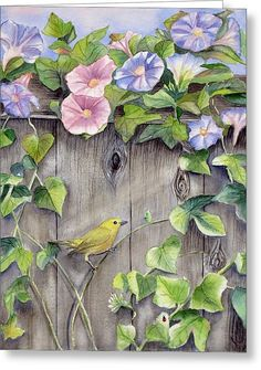 Yellow Warbler And Morning Glory Painting - Patricia Pushaw Watercolor Flowers, Watercolor Paintings, Morning Glory Flowers, Plant Illustration, Caricatures, Bird Art, Vintage Flowers, Art Pictures, Flower Art
