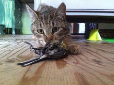 kat met dode vogel