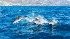 Dolphins  Animals photo by Mirco_Photography http://rarme.com/?F9gZi