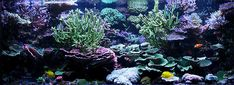 Saltwater Aquarium Plans | would like to start by thanking the Reef Central community for all ...