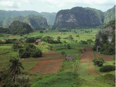 Visit the Viñales Valley, one of Cuba's most beautiful locales. Caribbean Freedom - romance & history set in the Caribbean country of Cuba. Available in paperback and Kindle edition. For more info, visit www.terimetts.com and ck under Novels.