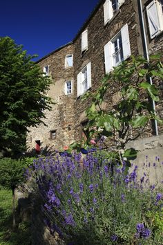Stay at La Muse artists and writers retreat in France. Terrace, Muse, Lavender, Places To Visit, France, Garden, Artist, Plants, Painting
