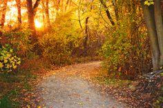 Pathway to autumn | Eagle, Idaho